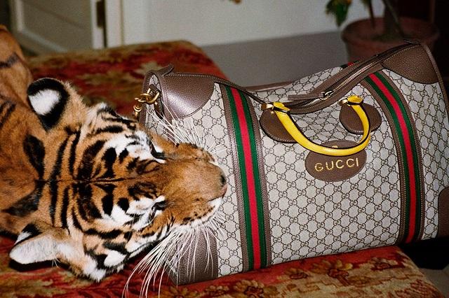 Gucci-materiały prasowe