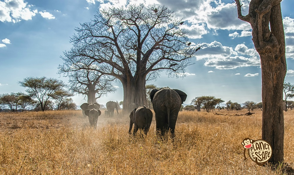 Mother and calf - african elephants in the Serengeti National Park, Tanzania
