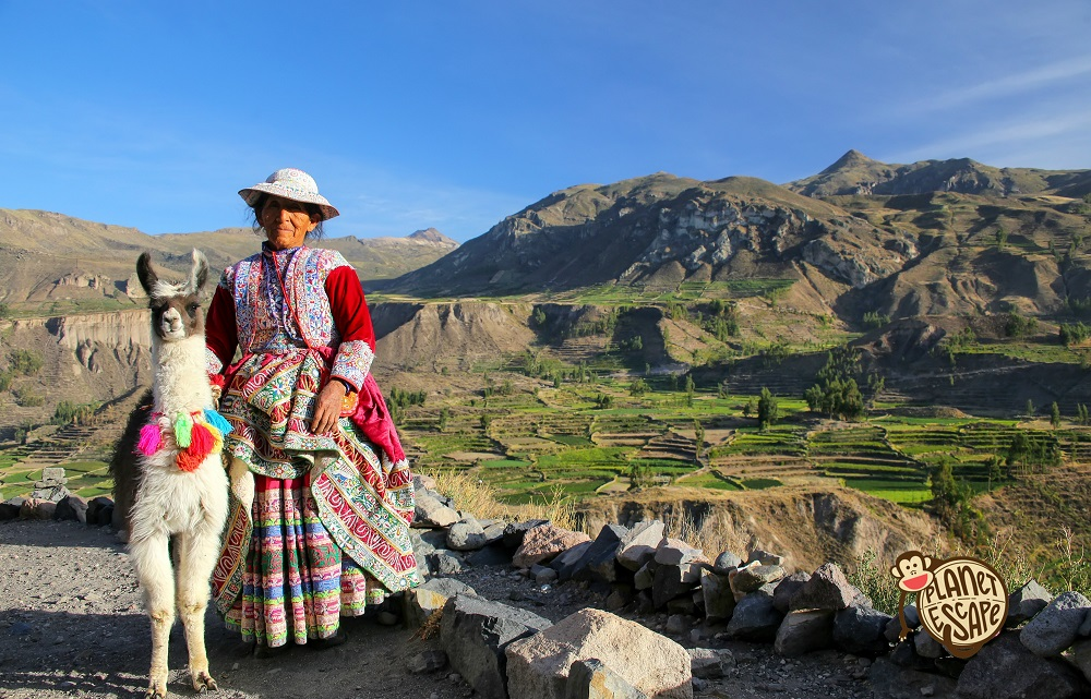 Colca, Peru - January 16, 2015: Local woman with llama standing at Colca Canyon in Peru. It is one of the deepest canyons in the world with adepth of 3,270 meters.